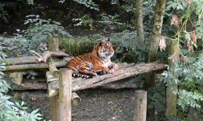 Top-7-Wildlife-Sanctuaries-in-India
